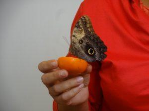 """Edukacinė valandėlė įstaigos ugdytiniams """"Tropiniai drugeliai iš arti"""" (2018 m. spalis)"""